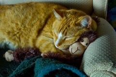 Orange kattkel med den förtjusande sockaapan arkivfoto