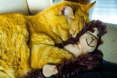Orange kattkel med den förtjusande sockaapan royaltyfri bild