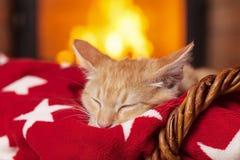 Orange kattunge som framme sover på den röda filten av spisen royaltyfri foto