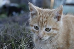 Orange kattunge som spelar i parkera av huset Royaltyfri Bild