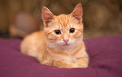 Orange kattungelögn på sängen