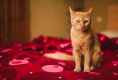 Orange kattungestående med kopieringsutrymme Arkivfoto