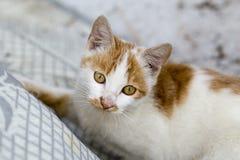 Orange Katze Stockbilder