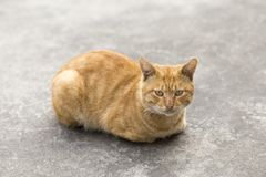 Orange Katze Lizenzfreies Stockfoto