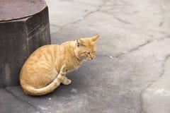 Orange Katze Lizenzfreie Stockfotos