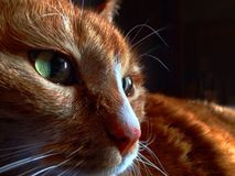 Orange Katze Stockfotos