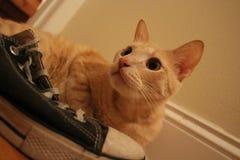 Orange Katze der getigerten Katze und sein alter Turnschuh stockbilder