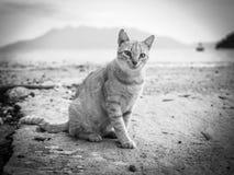 Orange Katze, die auf den Strand in Griechenland-Schwarzweiss-Bildern geht lizenzfreies stockbild