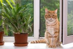 Orange Katze, die auf einem weißen Fenster sitzt Stockbild