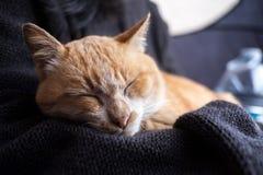 Orange Katze, die in der Mädchenumarmung schläft Lizenzfreies Stockfoto