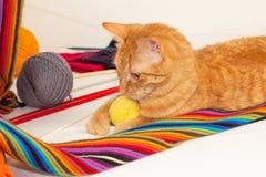 Orange Katze, die mit Wollschlaufen und -bällen spielt Lizenzfreie Stockfotos