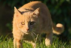 Orange Katze glücklich in der Natur Stockbild