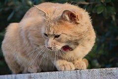 Orange Katze glücklich in der Natur Lizenzfreie Stockfotos
