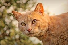 Orange Katze glücklich in der Natur Stockbilder