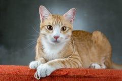 Orange Katzen, die auf dem Sofa im Raum sitzen Lizenzfreie Stockfotografie