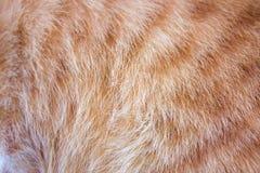Orange Katzenhaut-Beschaffenheitshintergrund Lizenzfreie Stockfotos