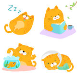 Orange Katzenvielzahlaktions-Satzillustration Stockfotos