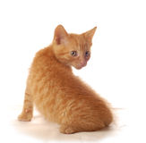 Orange kitten Royalty Free Stock Photography