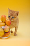 Orange kitten with an apricots Stock Photo