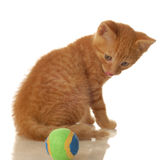 Orange kitten and ball Royalty Free Stock Photos