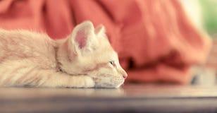 Orange kitten cat lie on wood ground closeup on its face pastel Royalty Free Stock Photo