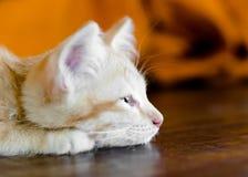 Orange kitten cat lie on wood ground closeup on its face  on woo Stock Image