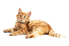 Orange kitten Royalty Free Stock Image