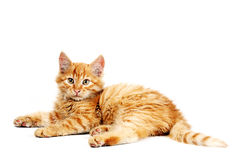 Orange kitten Royalty Free Stock Images