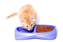 Orange kitten drinking water Stock Photos