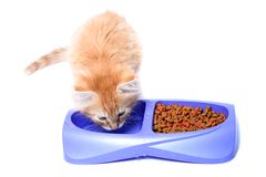 Orange kitten eating Royalty Free Stock Photography