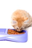 Orange kitten eating Stock Photos