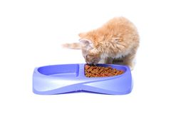 Orange kitten eating Stock Photography