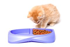 Orange kitten eating Stock Images