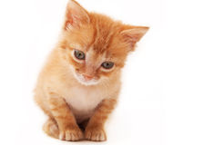 Orange kitten isolated Royalty Free Stock Photo