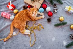 Orange kitten look up on carpet in christmas holiday with decoration and ornament. royalty free stock photo