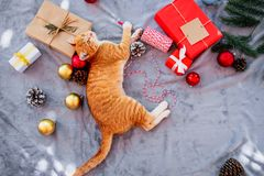 Orange kitten look up on carpet in christmas holiday with decoration and ornament. Domestic cute cat in winter and sunlight warm stock images