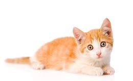 Orange kitten looking at camera on white background Royalty Free Stock Photos