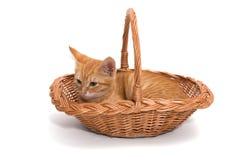 Orange kitten sitting in a basket Royalty Free Stock Images
