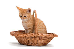 Orange kitten sitting in a basket Stock Photos
