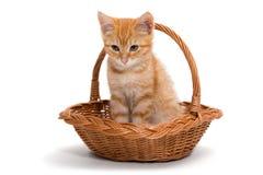 Orange kitten sitting in a basket Royalty Free Stock Photography