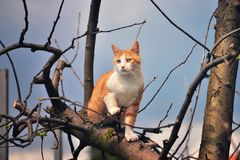 Orange kitten standing at the top of the tree Royalty Free Stock Images
