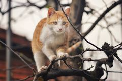 Orange kitten standing at the top of the tree Stock Photography