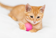 Orange kitten and toy Royalty Free Stock Images