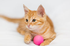Orange kitten and toy Stock Photography