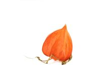 Orange kleine Lampe Stockbilder