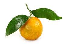 Orange Klementine Stockbild