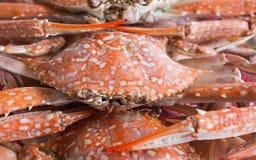Orange Krabbe für Lebensmittel Lizenzfreie Stockfotografie