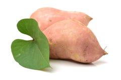 Orange Kumara Sweet Potato. Isolated on white background Royalty Free Stock Images