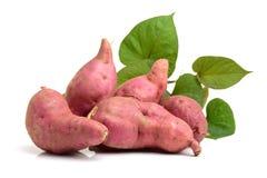 Orange Kumara Sweet Potato Royalty Free Stock Photography