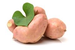 Orange Kumara Sweet Potato. Isolated on white background Royalty Free Stock Photography